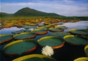 Lagoa com flores